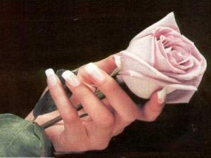 Hands holding a Rose